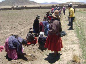 Menschen in Peru pflanzen Bäume am Ackerrand