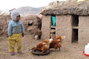 Kind mit Hühnern vor Hühnerstall aus Lehm in den peruanischen Anden